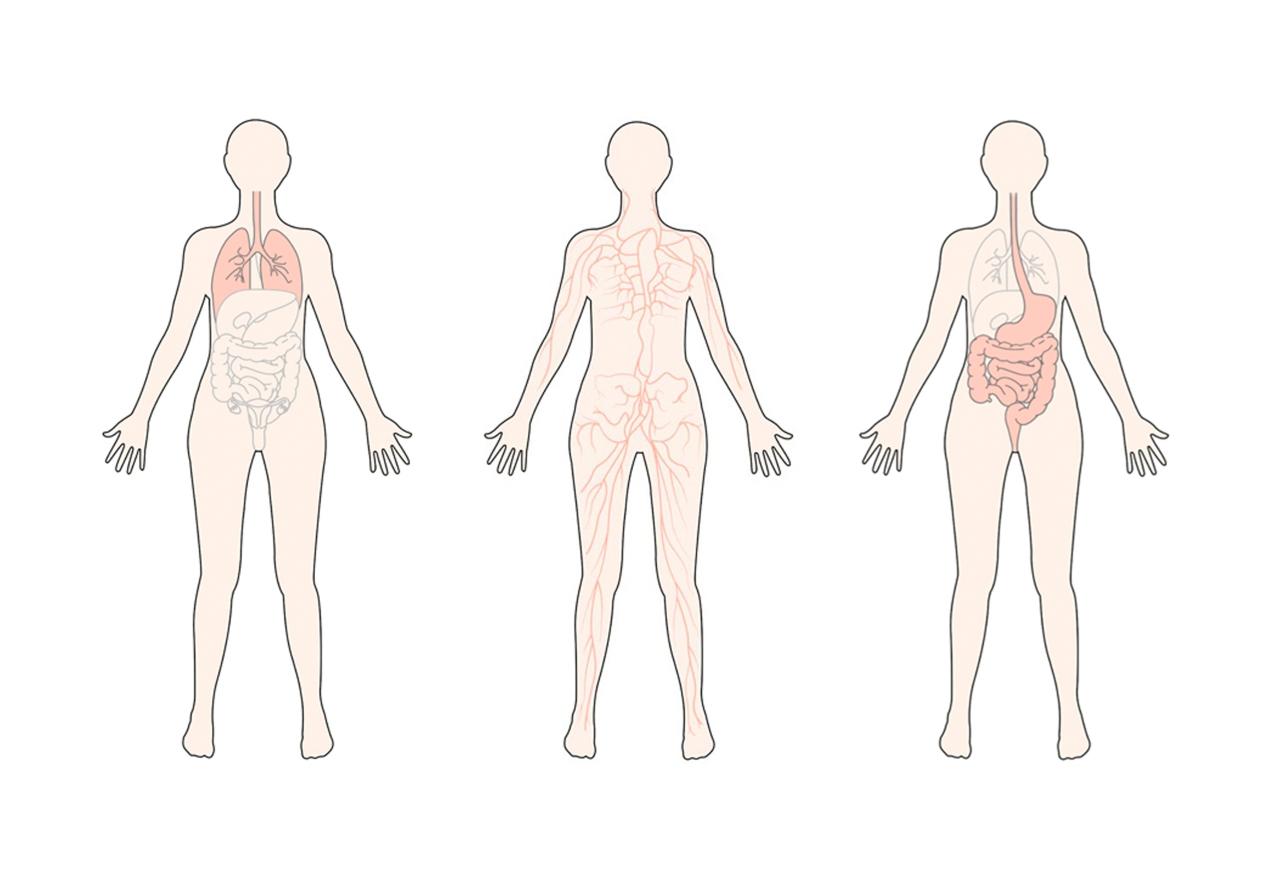 anatomi3